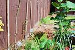 Garden fence and plants