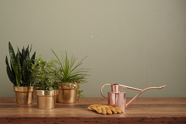 House plants to purify the air